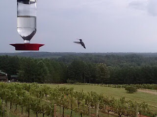 Mountain Brook Vineyards – Tryon, NC